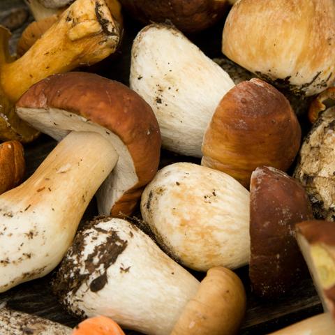 Come pulire i funghi | Su Comepulire.it