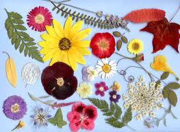 Pulire fiori finti