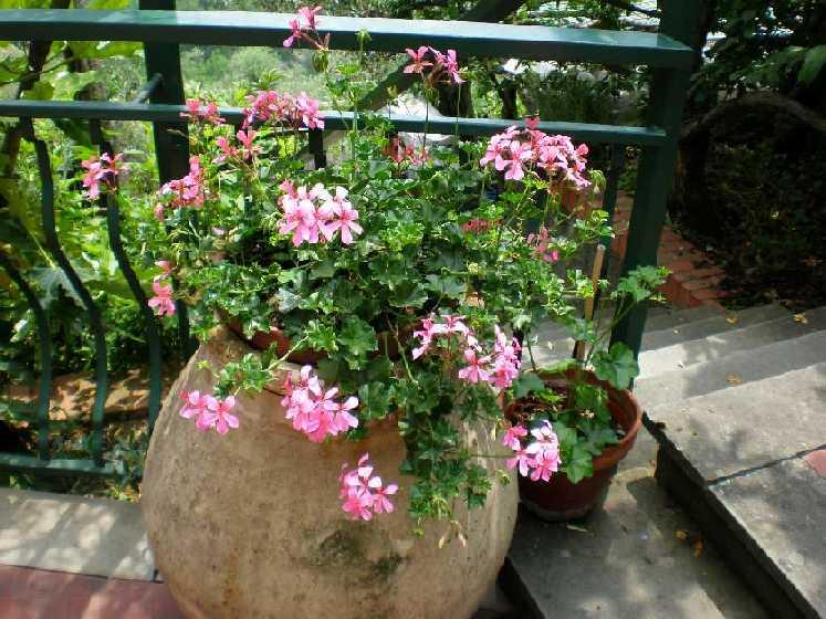 Come pulire i vasi dei fiori