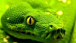 Pulizia della teca del serpente