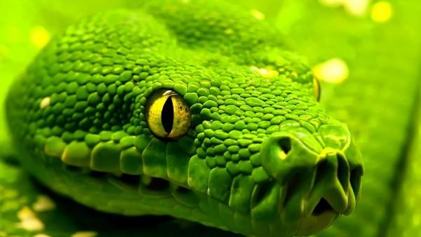 Come Pulire la teca del serpente