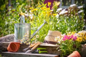 pulizia del giardino d'estate