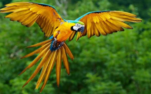 Come pulire il pappagallo
