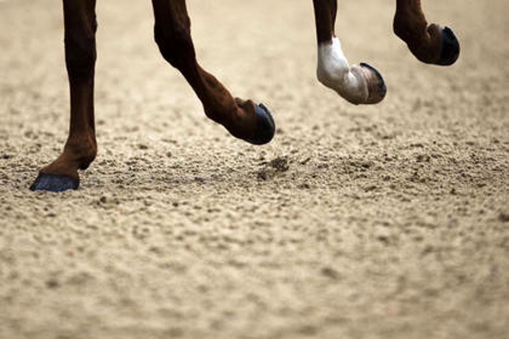 Come pulire lo zoccolo di un cavallo