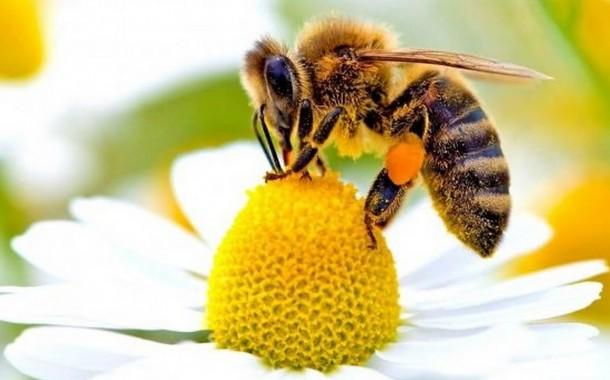 Come pulire e prevenire il polline in casa