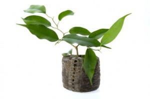 Pulizia delle piante di casa