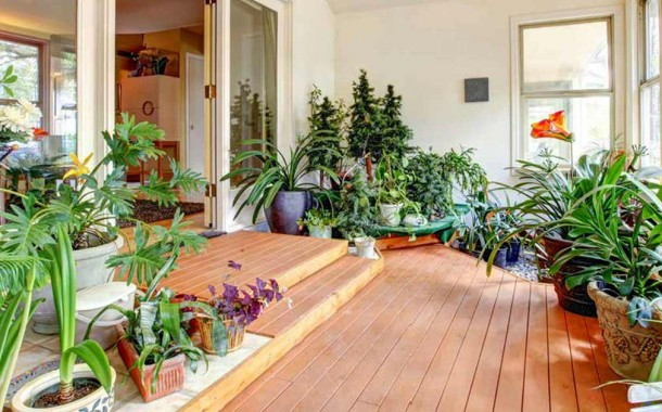 Come pulire le piante di casa