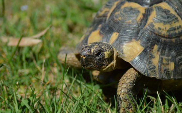 Come pulire il terrario della tartaruga