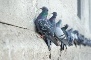 Pulizia degli escrementi degli uccelli
