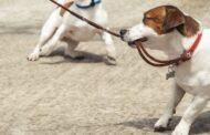 Come pulire il guinzaglio del cane