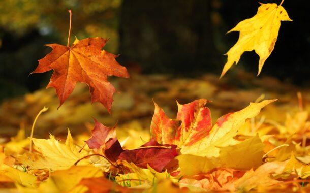 Come togliere le foglie in autunno